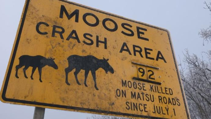 Moose crash road sign